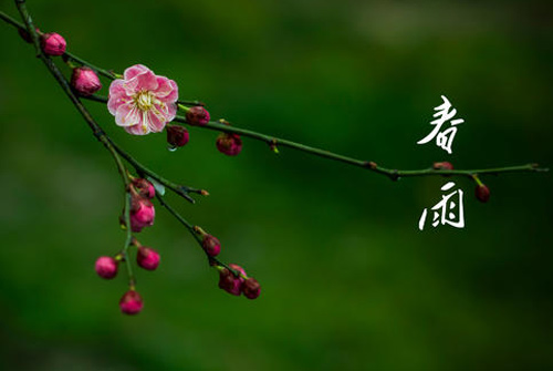 描写春天的句子短句 春天的优美句子摘抄