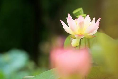 佛语经典语录-佛语人生哲理经典语录