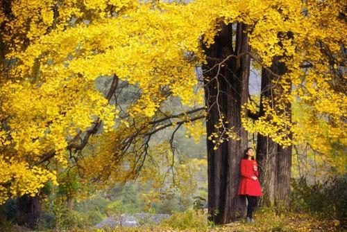 赏秋的精美句子-关于秋天的优美句子大全