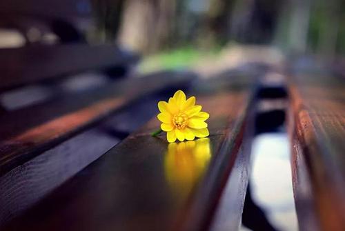 幸福是什么的经典语录 一句话说出幸福是什么