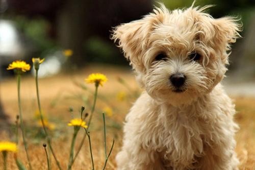 有狗狗陪伴的心情句子-感谢宠物陪伴的经典句子